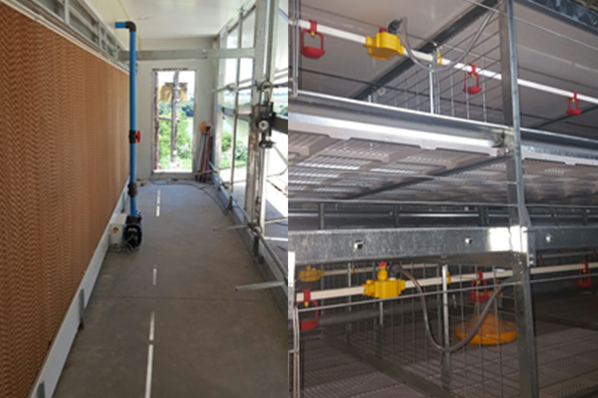 dynamic-automation-broiler-cage-systems-4