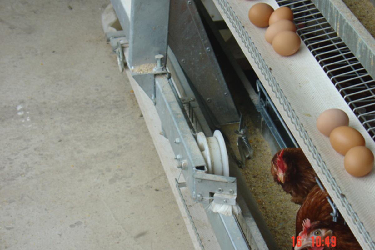 vertical-layer-egg-handling-egg-belt