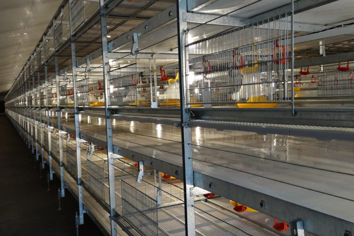 dynamic-broiler-floor-systems