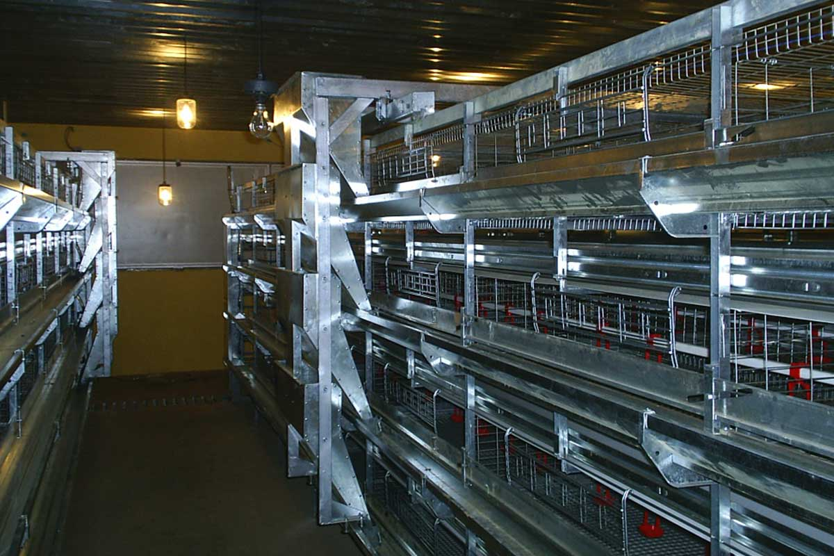 dynamic-automation-rearing-cage-systems